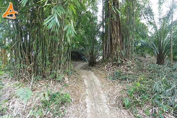 Jalan ke Bukit Rancutn Serukam Bengkayang