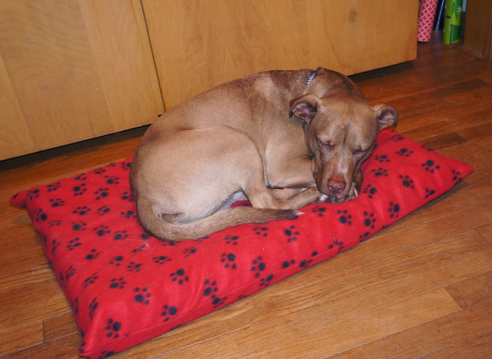 How To Make An Orthopedic Dog Bed Mycoffeepot Org
