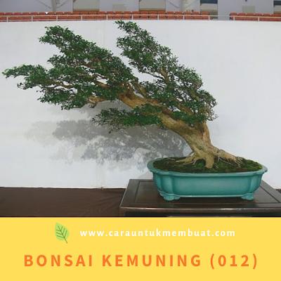 Bonsai Kemuning (012)