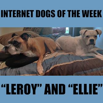 INTERNET DOGGOS OF THE WEEK!