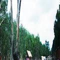 Danau Shuji Anugrah Allah Terindah di Bumi Lembak