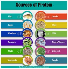 6 Easy Sources of Protein You Might Be Overlooking and Shouldn't