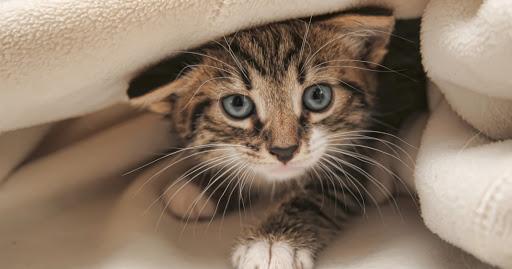 Gambar Kucing paling imut