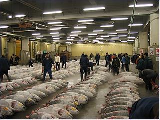 ตลาดปลาซึกิจิ (Tsukiji Fish Market)