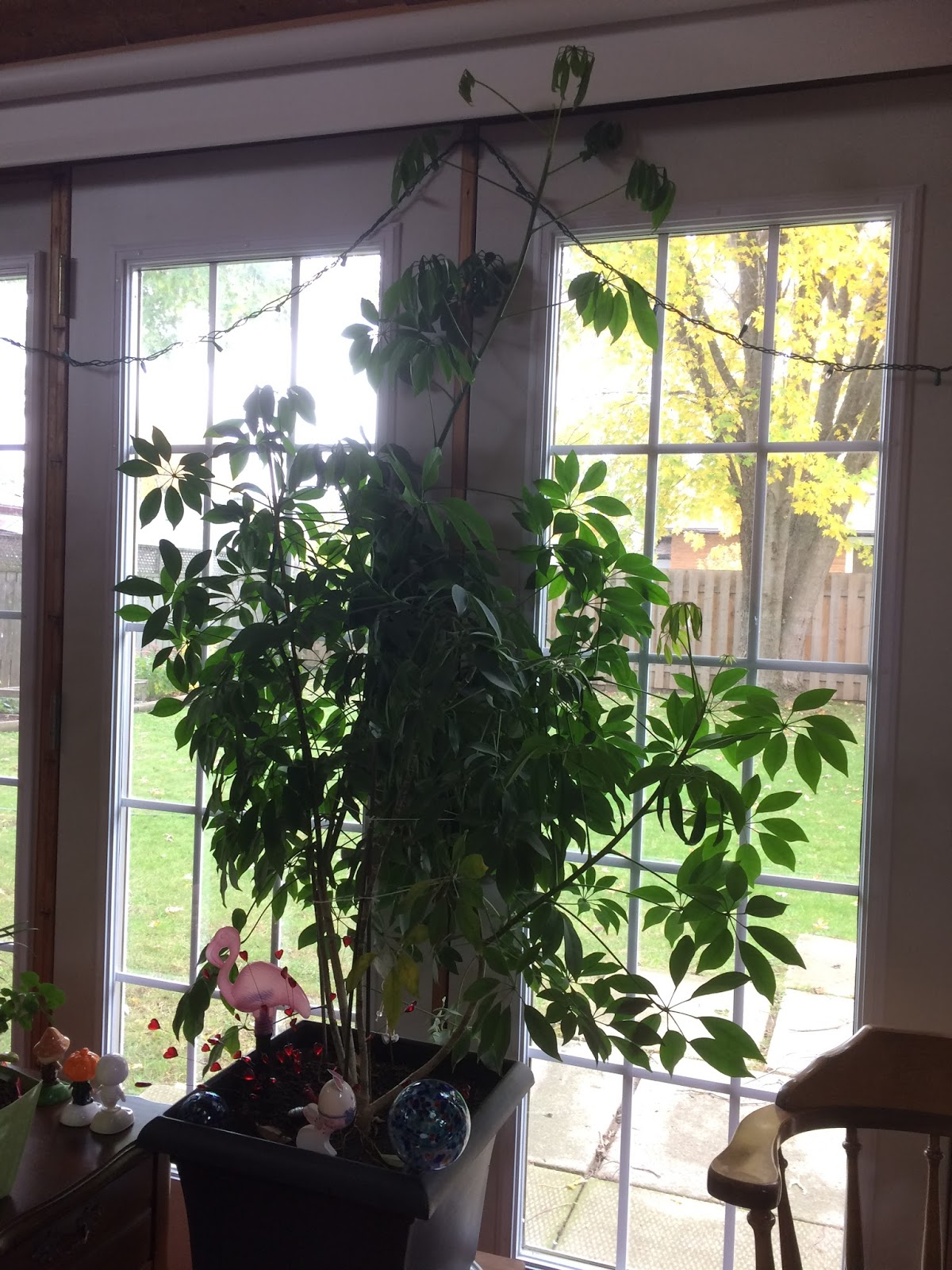 Indoor Plants How To Indoor Plant Care Pruning Your