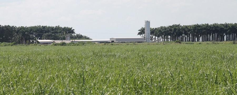 Fincas y campos de cultivo en Lake Harbor