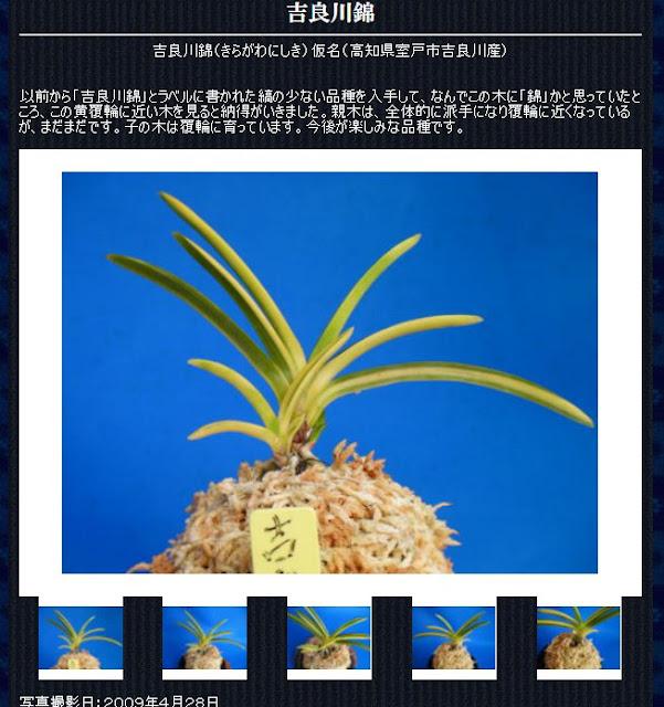 http://www.fuuran.jp/jiman_kiragawanisiki.html