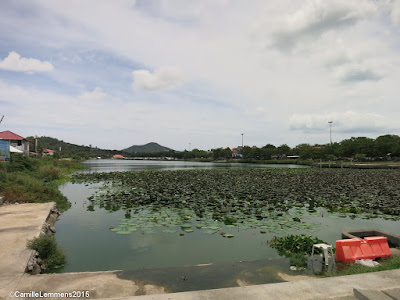 Cleaning of Chaweng lake and klong area 17-19 October