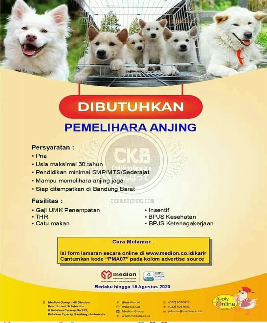 Lowongan Kerja Pemelihara Anjing di Bandung 2020