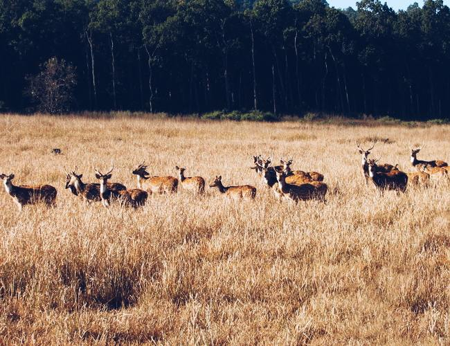 Rajaji National Park near Haridwar
