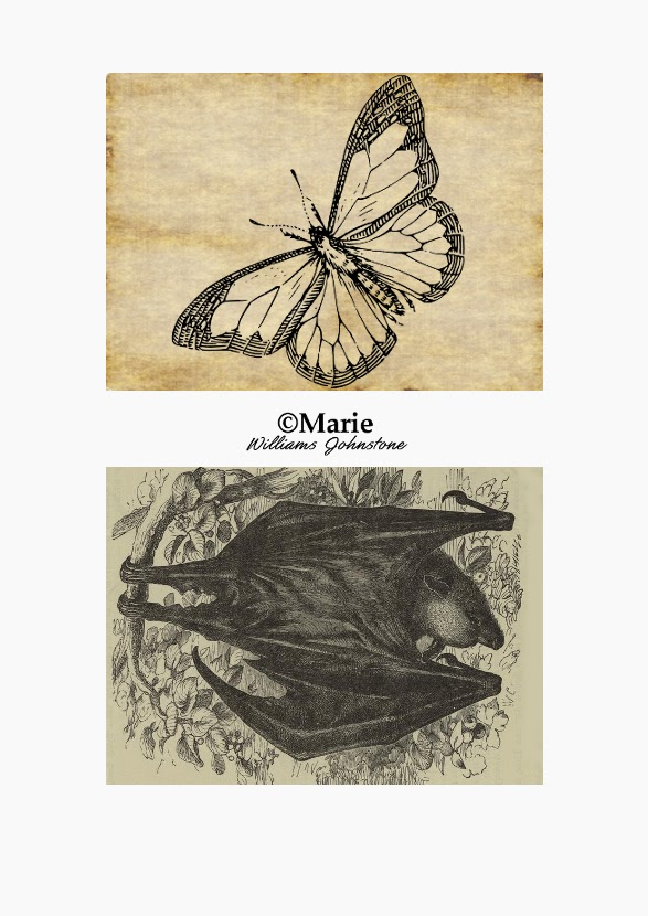 Black Bat and Butterfly over Cream Color Backgrounds