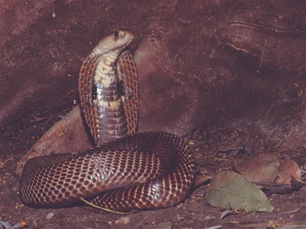 News, National, India, Bhoppal, Madya Pradesh, Snake, House, Family, COVID19, Forest, Hundreds of Snakes Inside a Home at Bhopal