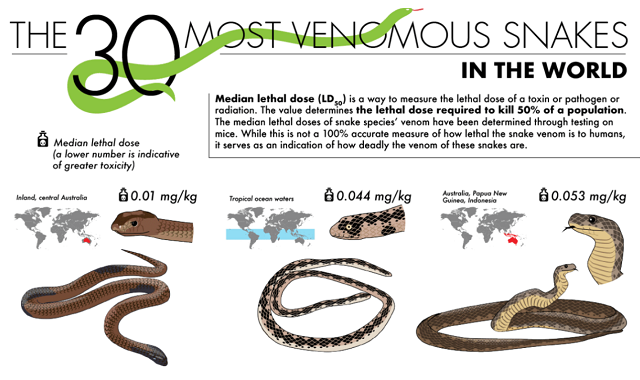 The 30 Most Venomous Snakes in the World