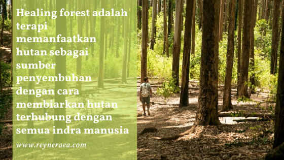 healing forest di hutan papua