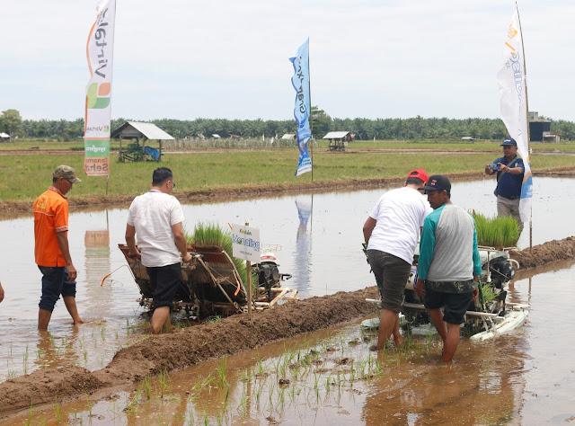 Anggota DPRD Pasbar Dedi Lesmana Hadiri Syukuran Turun ke Sawah di Bunuik Kinali