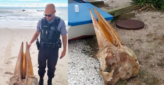 Crânio gigante em praia dos EUA tem uma explicação
