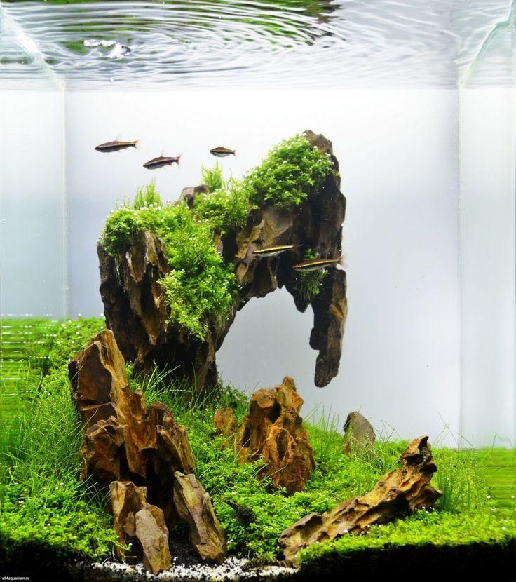 bố cục đá tiger đơn giản cho hồ thủy sinh nhỏ