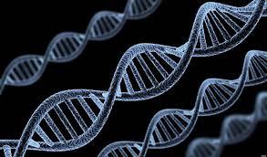 Nomenclatura de  genes humanos modificada