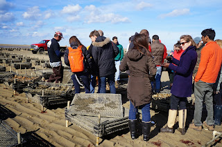 Tour Big Rock Oyster Company   mass Oyster Project  Fletcher School
