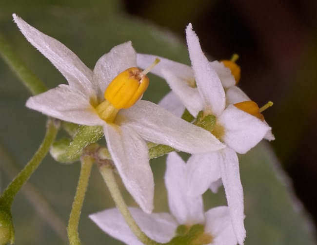 close-up photography, blossom, tiny weed, tropical rain forest,Philippines