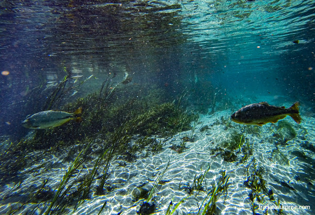 Paisagem submersa durante a flutuação na nascente do Rio Sucuri, em Bonito, Mato Grosso do Sul