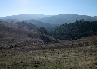 Pasture and distant hills viewed from top of Altamont Road