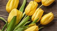 Yellow flower , Eggs mobile wallpaper