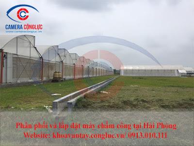 Hình ảnh nông trường trồng rau sạch của công ty Vineco.