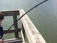 Pemancing Cilik Kaget oleh Hewan yang Memakan Tangkapannya