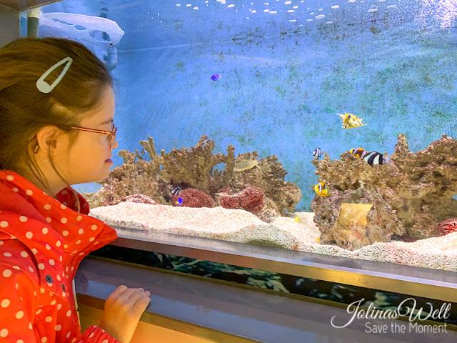 Zee Aquarium Bergen aan Zee Holland tropische Fische