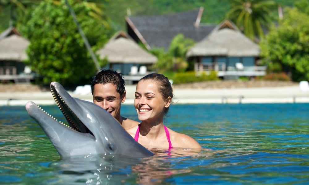 MOZIRS_Dolphin_Swim moorea-intercontinental-honeymoon Destinations amazingexplore