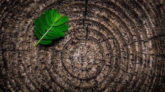 Green Leaf Plant on Brown Wooden Stump Photographic Rings Texture Wood HD Wallpaper