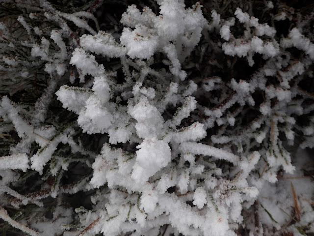Zamarznięte rośliny w Beskidach