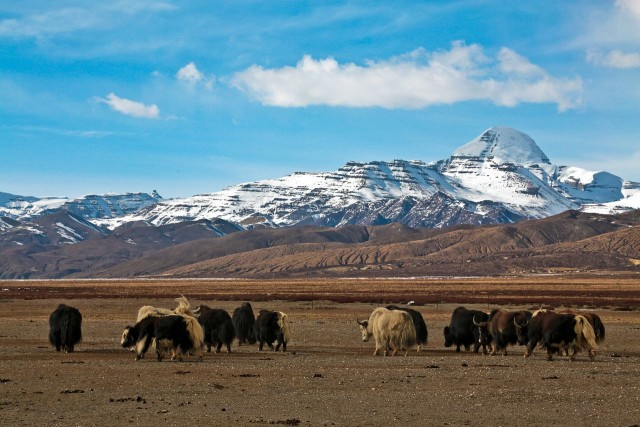 Why You Should Enjoy Your Tibet Tour from Kathmandu