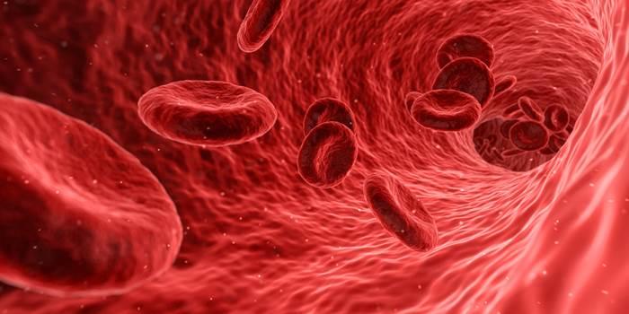 Eritrocitos o glóbulos rojos humanos