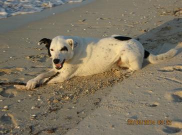 Собака лежит на песке