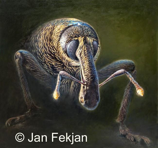 Bilde av digigrafiet  'Portrett av en skogsarbeider 1'. Digitalt trykk laget på bakgrunn av et maleri av et insekt. Illustrasjon av gransnutebille, Hylobius abietis. Hovedmotivet er en nærstudie av et insekt. Bildet er nærmest kvadratisk.