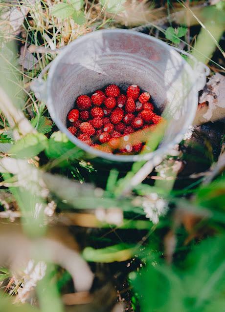 Wild Strawberries : The Gift Of Allpamama