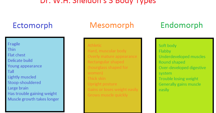 Metabolism 3 Body Types And How It Affects Muscle