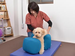 exercício de recuperação para cães