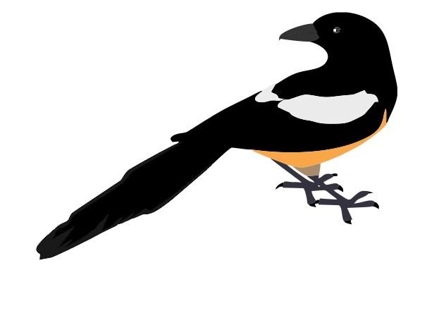 how to design a logo bird contest