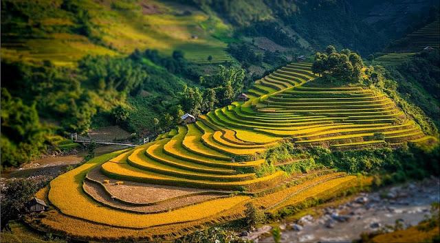 Vietnam is wonderful in ripen rice season 4