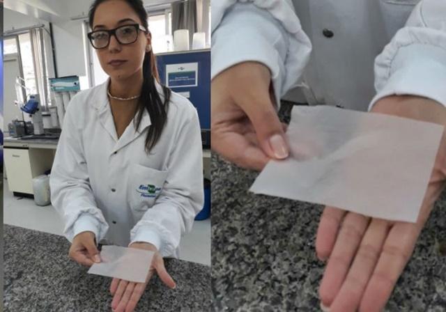 Projeto sobre curativo à base de nanocelulose de pínus leva pesquisadora paranaense a final de premiação
