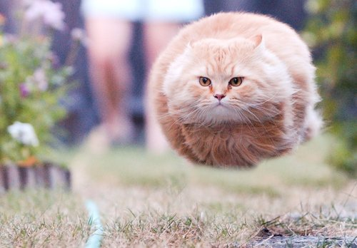 photo trick  hover cats original pictures  gif and posters