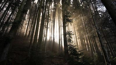 Wallpaper Dawn, Sunlight, Nature, Forest, Trees