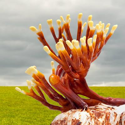 Ganoderma mushroom company in Uttarakhand