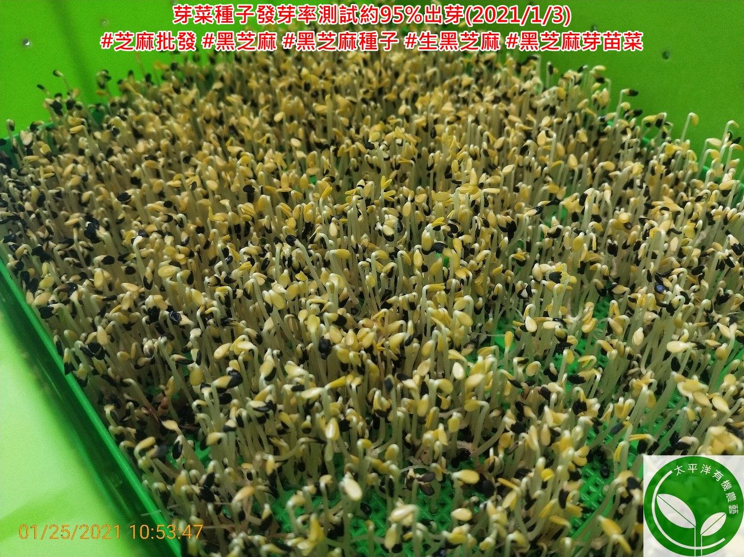 芝麻,黑芝麻批發商,台灣黑芝麻價格,黑芝麻的功效,黑芝麻,黑芝麻食用量,芝麻功效與禁忌,黑芝麻豆漿,黑芝麻粒,小農黑芝麻