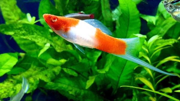 Breed & Sell Aquarium Fish for Profit