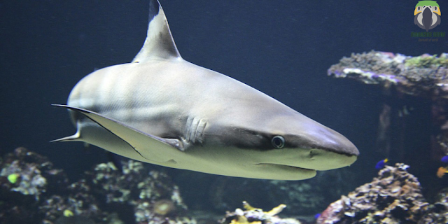 The Colombian government authorizes the fishing of sharks and fins