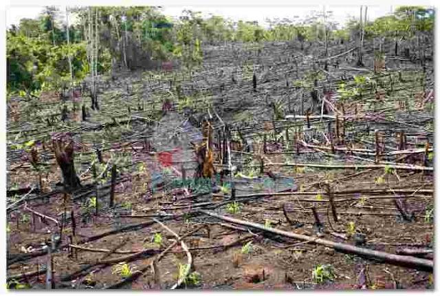 Aktivitas penggundulan hutan guna pembukaan lahan baru termasuk efek contoh gangguan dalam ekologi
